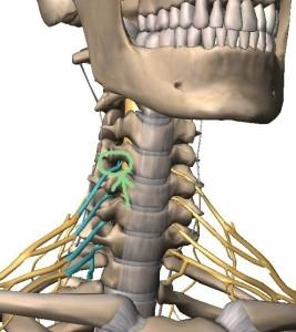 neck-1