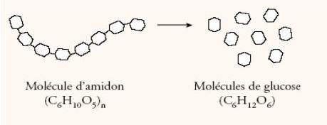 amidon-glucose