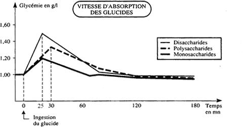vitesse d'absoption des sucresucres